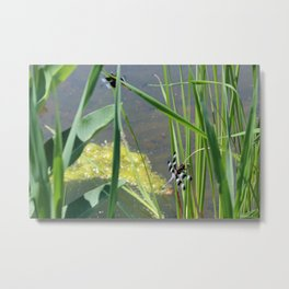 Dragonfly by the Pond Metal Print