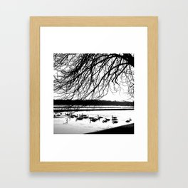 Swans in wintertime in the North of theNetherlands Framed Art Print