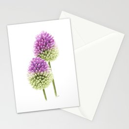 Drumstick Allium Stationery Cards