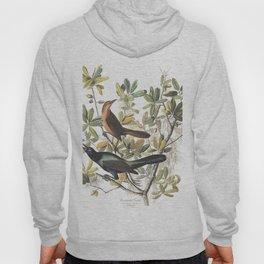 Boat tailed grackle, Birds of America, Audubon Plate 187 Hoody