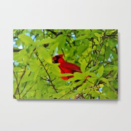 Red Bird In The Middle Metal Print