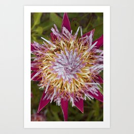 Bee and the Flower Art Print