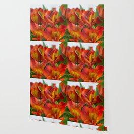 Alstroemeria Inca Cluster Wallpaper