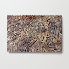 Tree Trunk Metal Print