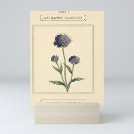 Flower Devil s bit Scabious scabiosa succisa14 Mini Art Print