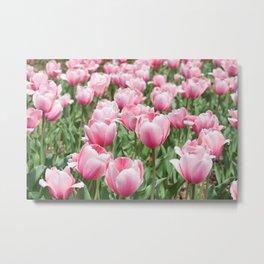 Arlington Tulips Metal Print