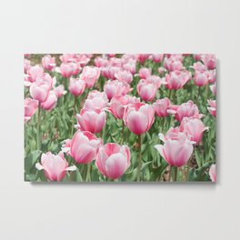 Arlington Tulips Metal Print