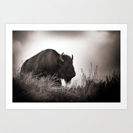 Buffalo: Grand Tetons National Park Art Print