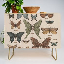Butterflies and Moth Specimens Credenza