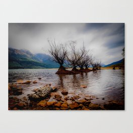 Glenorchy Willow Trees Canvas Print