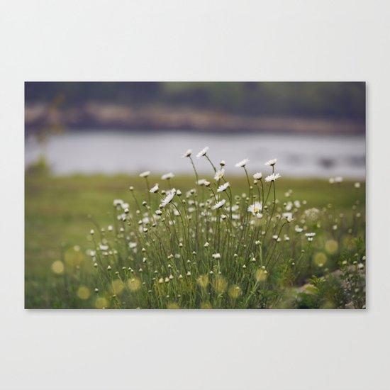 Wild Daisy's Canvas Print