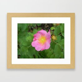 Wild South Dakota Rose Framed Art Print