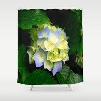 hydrangea Shower Curtains featuring Hydrangea  by Chris' Landscape Images & Designs