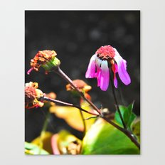 Hanging on to beauty Canvas Print