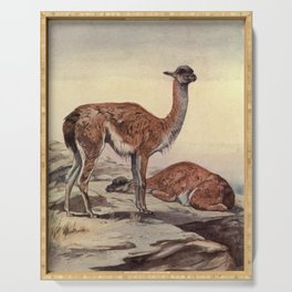 Vintage Guanacos Painting (1909) Serving Tray