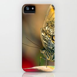 Butterfly - Caligo memnon iPhone Case