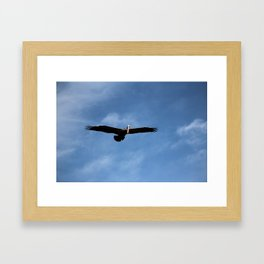 Pelican In The Afternoon Framed Art Print