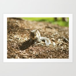 Baby Squirrel Art Print