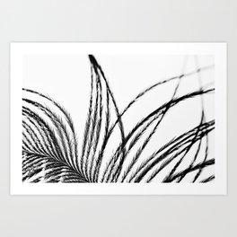 Plume- A Feather Study 1 Art Print