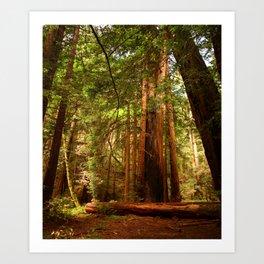 Muir Woods Walkway Art Print