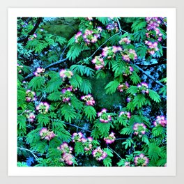Mimosas on the River Art Print