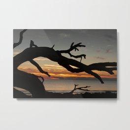 Sunrise Driftwood Metal Print