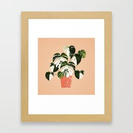 Monstera Variegata Framed Art Print