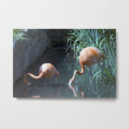 Philadelphia Zoo Series 32 Metal Print