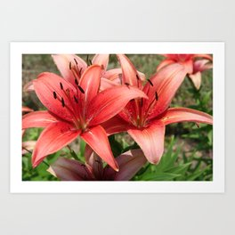 Daylilies Art Print