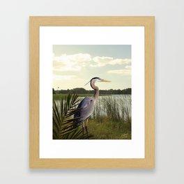 Great Blue Heron in the Bulrushes Framed Art Print