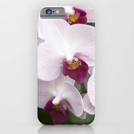 Longwood Gardens Orchid Extravaganza 4 iPhone Case