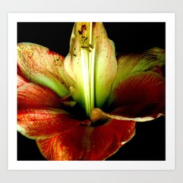 Red Green Yellow Blossom with Calyx Art Print