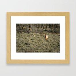 The Bull Elk Framed Art Print