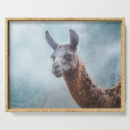 Curious, wise looking guanacao / llama on a blue misty morning in the Andes mountains, Peru Serving Tray