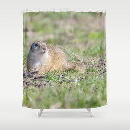 Souslik (Spermophilus citellus) European ground squirrel in the natural environment Shower Curtain