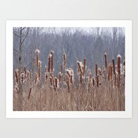 furry Art Prints featuring Furry Cattails by DanByTheSea