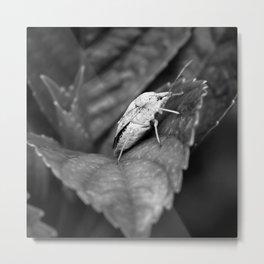 Stink Bug Metal Print