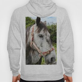 Horse With No Name Hoody
