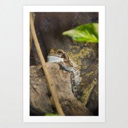 Veined tree frog Art Print