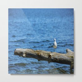 Seagull on Driftwood Metal Print