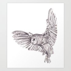 Pencil Drawing - Owl in flight Art Print