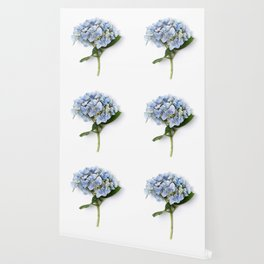 Blue hydrangea flowers Wallpaper