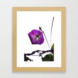 ipomoea Framed Art Print