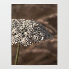 Anne's Lace Poster