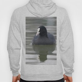 Coot swimming (Fulica atra) Close up Eurasian Coot Hoody