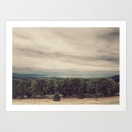 Orange Groves Art Print