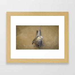 Casper the Cockatiel Framed Art Print