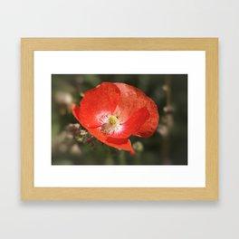 The Poppy Framed Art Print