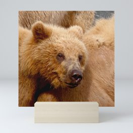 Brown Bear Grizzly Mini Art Print