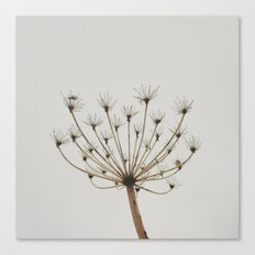 Dried up Canvas Print
